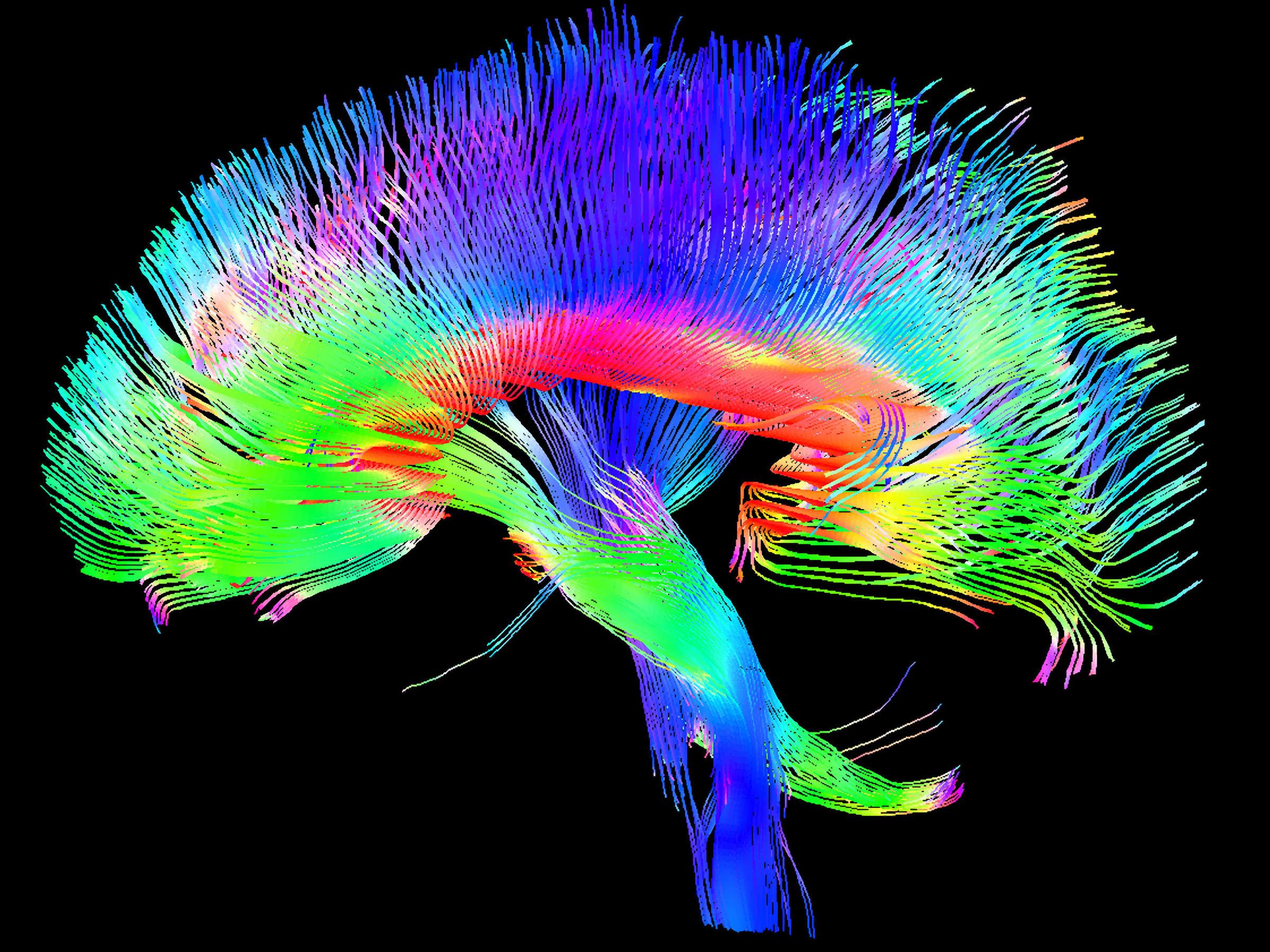 Les mouvements à l'intérieur du corps – Movements inside the body